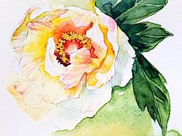 水彩花卉练笔--芍药
