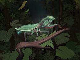 一只小螳螂