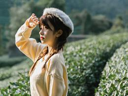 在秋天的茶叶园里