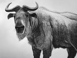 钢笔画~羚牛