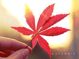 秋天的味道(Autumn's flavor)