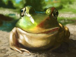 晚间练习:青蛙一只