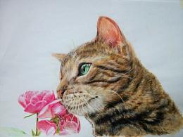 彩铅手绘【猫】