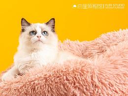 商拍 | ET超宠俱乐部 猫咪系列