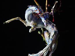 """海龙软陶作品,山海经里的怪兽""""琿"""""""