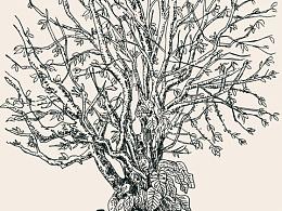 菩提树吗?还是混搭?树下长椅,依稀往忆