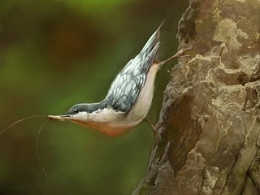 Bird习作