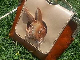 兔兔/豚鼠包出游记