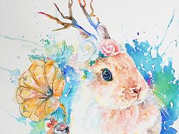 超白大叔水彩一枚萌萌的荷兰侏儒兔
