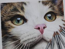 手绘-彩铅-猫