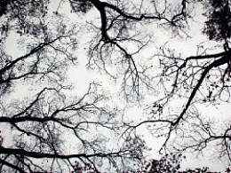 枯树【生命的延生】