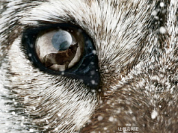 《狼图腾》电影海报设计草稿
