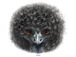 什么鸟发型
