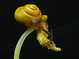 【化作自然】系列第一弹《蜗巢之龙》