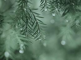 盛夏的雨天
