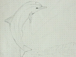 海豚:flipper: