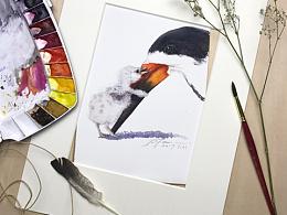 我的一些鸟类作品