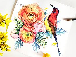 【告白春天】花之舞 鸟之诗
