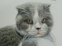 猫1完成作业