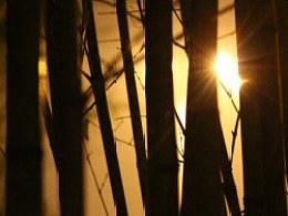 木·斑驳·光影