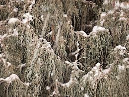 :deciduous_tree:植物