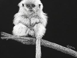 呆萌金丝小猴