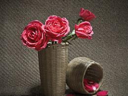 静物摄影玫瑰花,花卉摄影~!