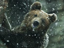 要想动物拍的好,大下雪天往动物园跑。