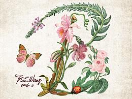 花鸟插画字体设计(1)