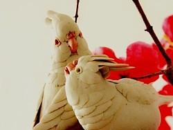 鹦鹉《陶瓷鸟》动物鸟纯手工艺术雕塑家居装饰摆件软装设计