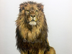 《狮子王》