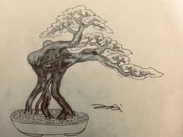 手绘盆景设计效果图