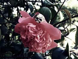 Hellawyer-skull&flower