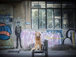宠物摄影师dante