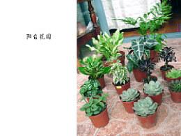 打造我的香草花园