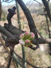 春,古月廴聿