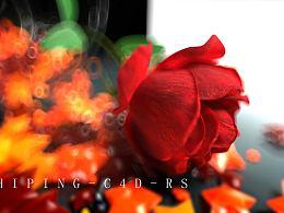 玫瑰花C4D RS