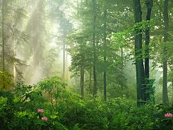 Mattepainting Forest