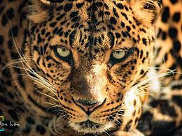 动物摄影 (动物园一日游)