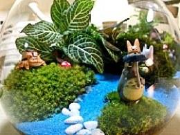 绿色小宠——【微景观】