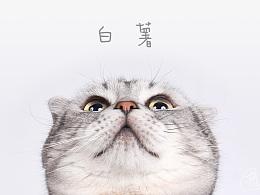 Onescat-克查原创作品【5】苏格兰折耳猫-白薯
