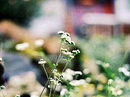 路边的小花小草