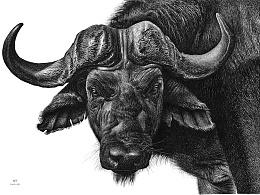 OY钢笔画:牛