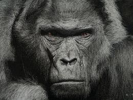 钢笔画黑猩猩