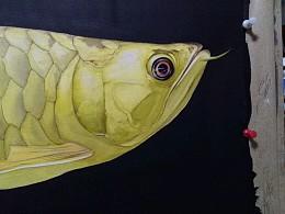 水彩龙鱼(步骤,2K)