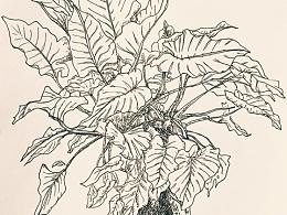 谁知道叫啥植物呢