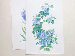 水彩花卉 手绘