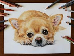 手绘-彩铅-狗狗∪・ω・∪