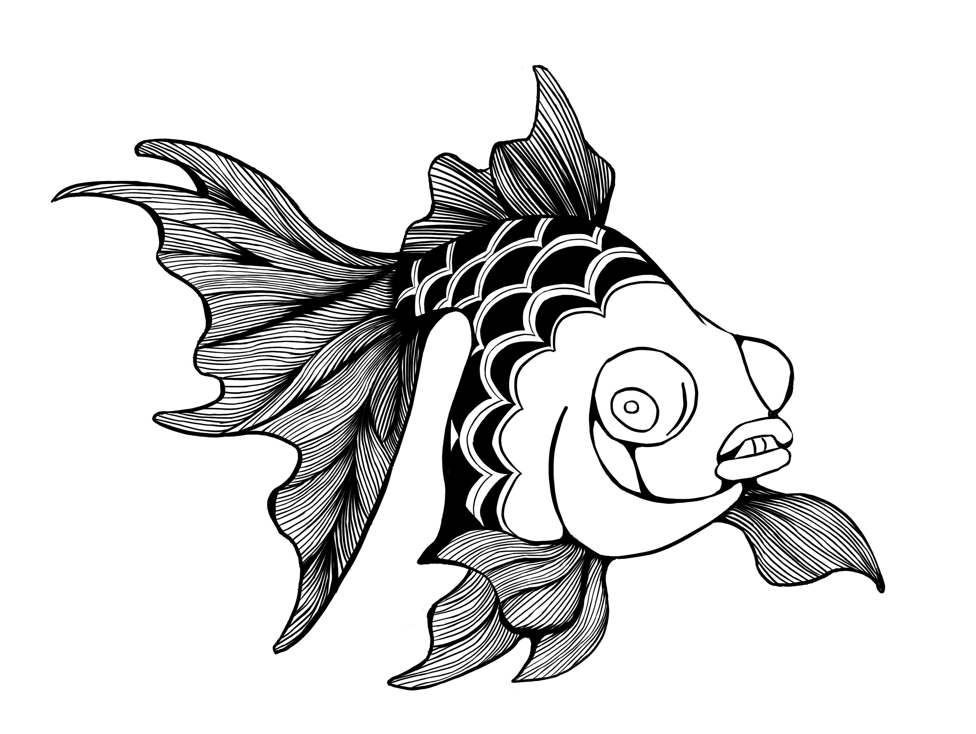 金鱼线描(临摹)图片