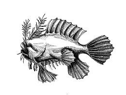 这个世界上很丑的鱼